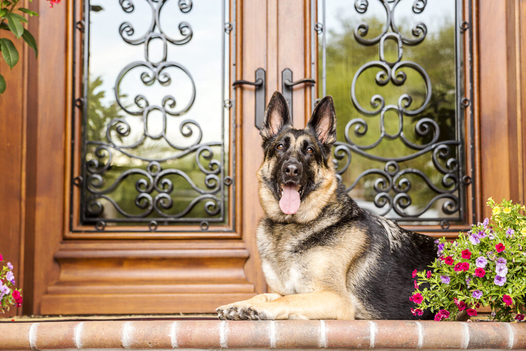 Security dog vs guard dog - Crimsafe security screens